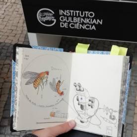 RabiscosIGC, FotoSketchers 2 Linhas, Urban Sketching, Urban Sketchers, SciComm, Comunicação de Ciência, Ciência, Rita Caré, Instituto Gulbenkian de Ciência